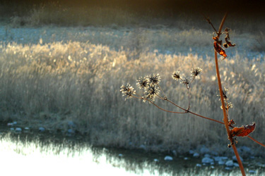 100119_dried_flowers.jpg