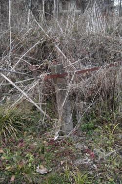 100122_deserted_garden.JPG