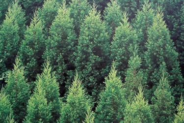 100125_deep_forest.jpg
