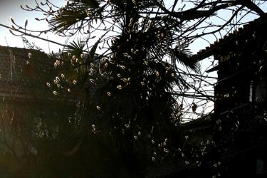 100131_snow_tree.jpg