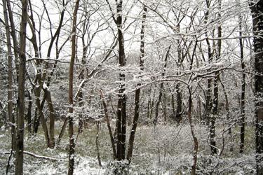 100217_forest.jpg