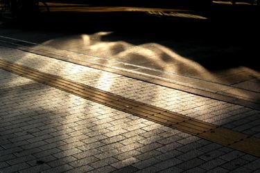 100219_sunlight.jpg