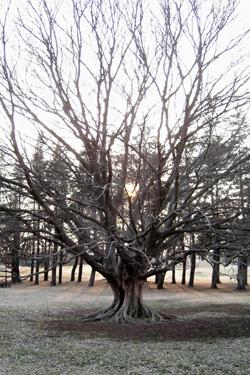 100223_tree.jpg