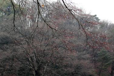 100228_rainy_trees.jpg