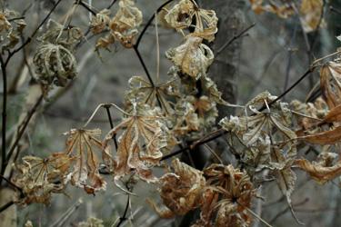 100301_dead_leaves.jpg