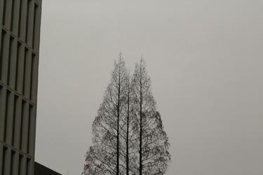 100319_trees.jpg
