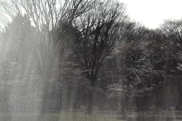 100329_mist.jpg