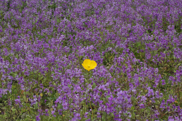 100402_yellow_flower.jpg