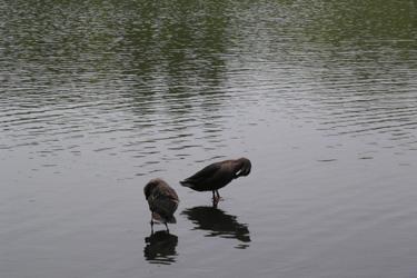 100509_ducks.jpg
