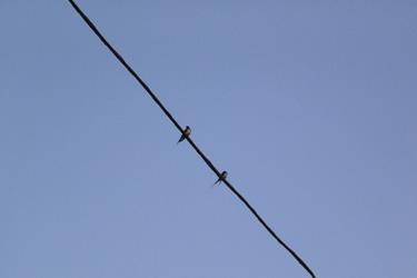 100510_swallows.jpg