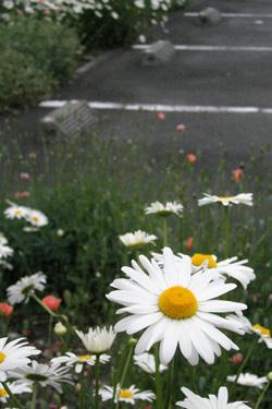 100514_flowers.jpg