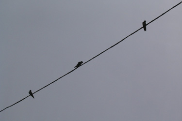 100621_swallows.jpg