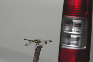 100703_dragonfly.jpg