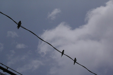 100708_swallows.jpg