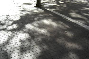 100805_shadows.jpg