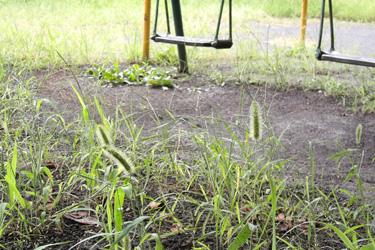100809_pampas_grass.jpg