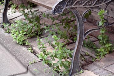 100813_natural_planter_c.jpg