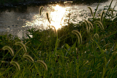 100827_river.jpg