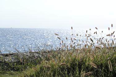 100904_pampas_grass.jpg