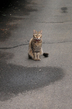 100924_cat.jpg