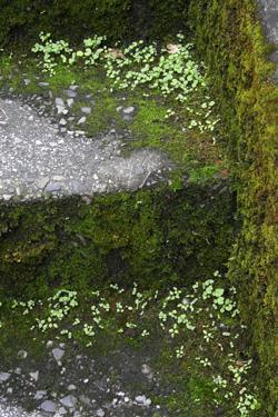 100927_stone_steps.jpg