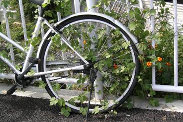 101003_bicycle.jpg