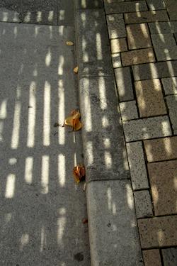 101012_fallen_leaves.jpg
