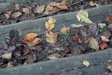 101019_fallen_leaves.jpg