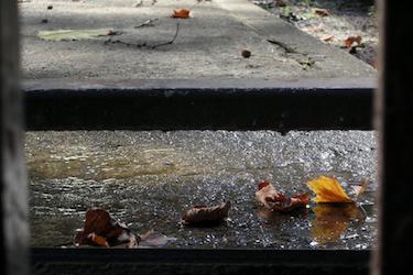 101026_fallen_leaves.jpg
