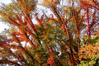 101108_autumn_color.jpg