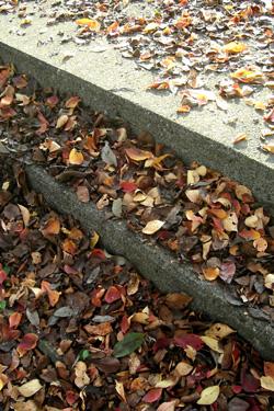 101109_dead_leaves.jpg