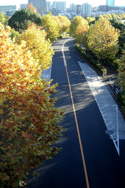 101110_autumn_road.jpg
