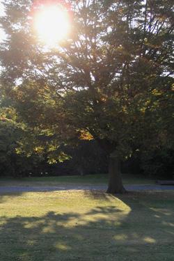 101111_tree.jpg