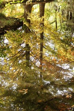 101117_aqua_forest.jpg