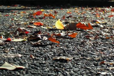 101124_fallen_leaves.jpg