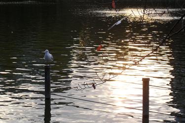 101127_birds.jpg