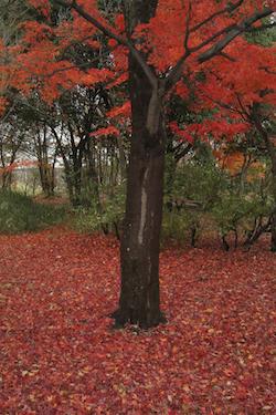 101204_red_land.jpg