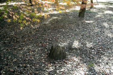 101205_stump.jpg