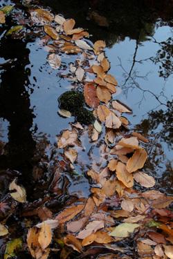 101212_dead_leaves.jpg