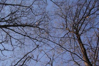 101220_trees.jpg