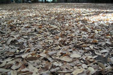 101222_dead_leaves.jpg