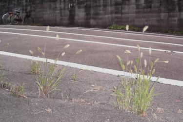 101223_pampas_grass.jpg