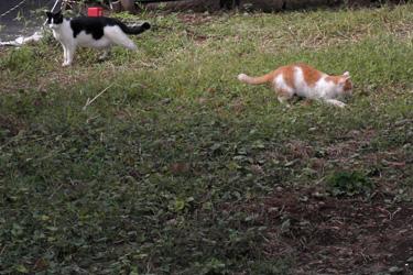101226_cats.jpg