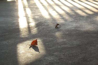 101231_fallen_leaves.jpg