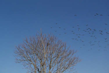 110110_pigeons.jpg