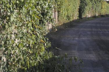 110121_green_wall.jpg