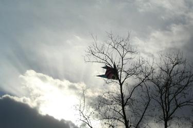 110125_kite.jpg