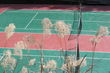 110201_tennis_court.jpg