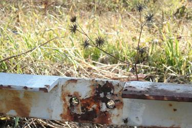 110203_dead_flowers.jpg