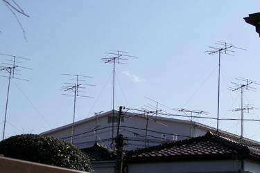 110208_dragonflys.jpg